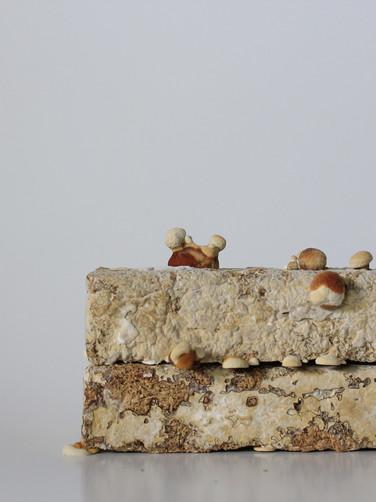 Engaging Mycelium