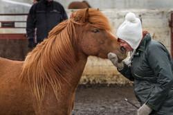Ice_Horse_012