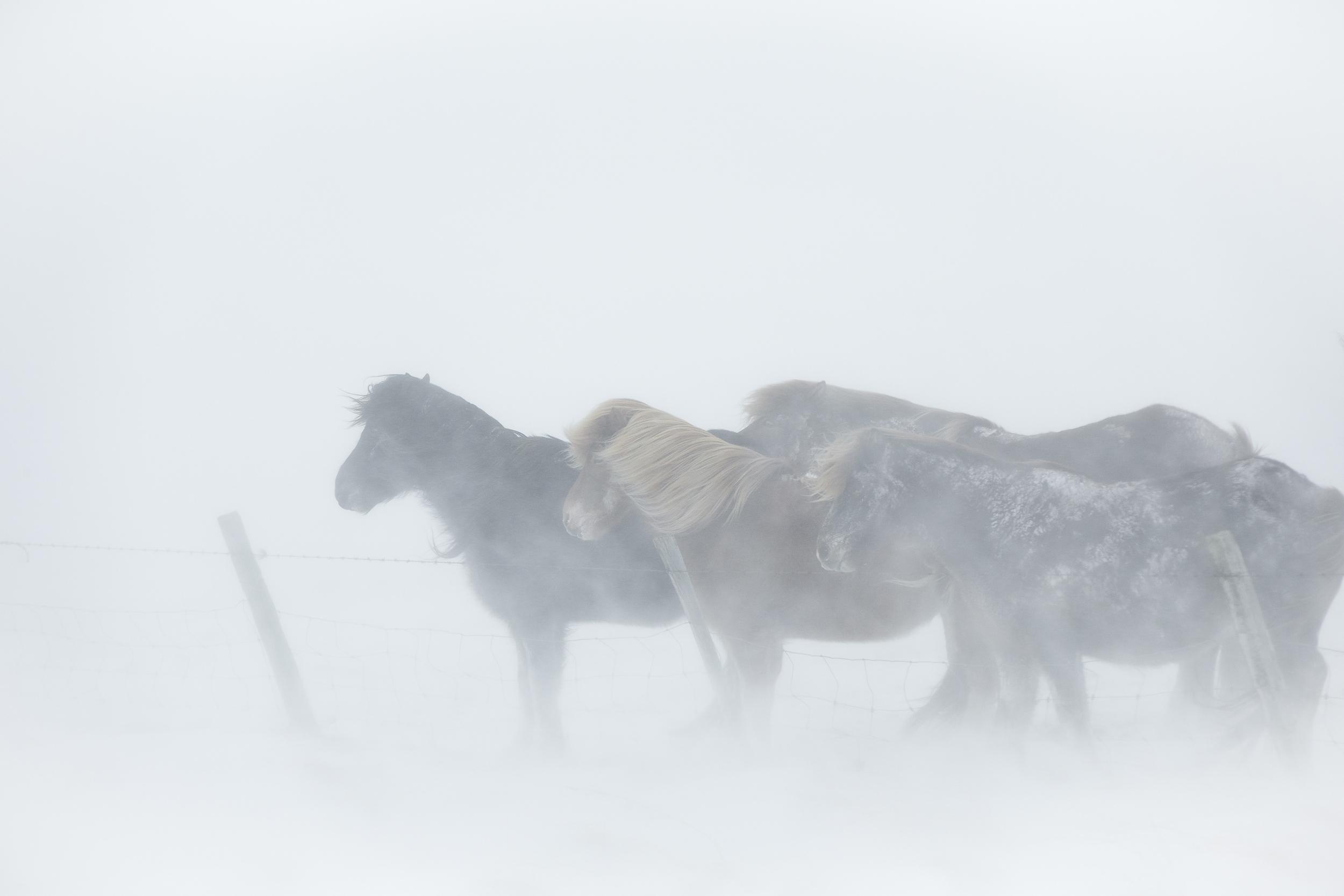 Ice_Horse_026