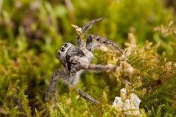 Arachna_024