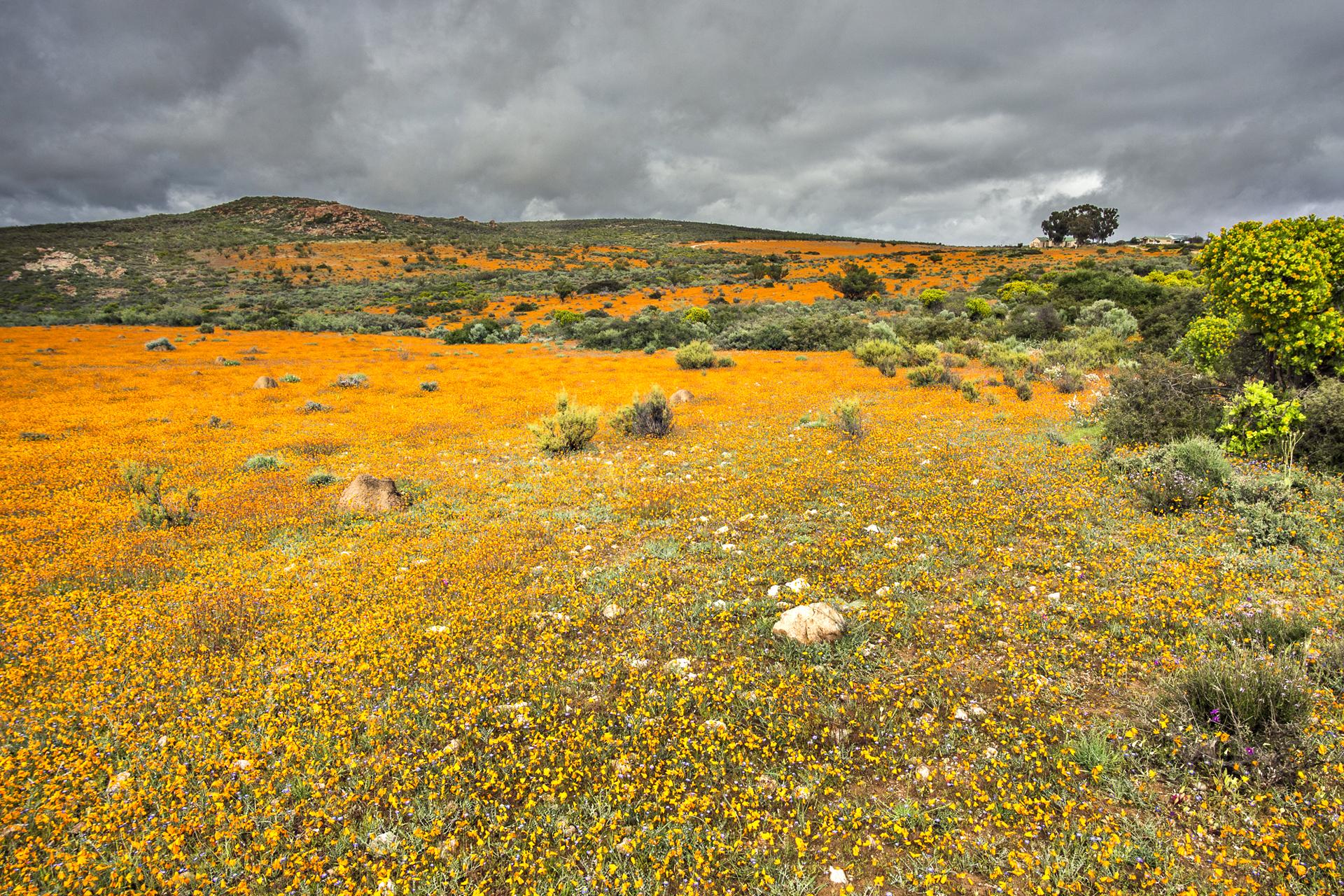 SouthAfrica_029.jpg