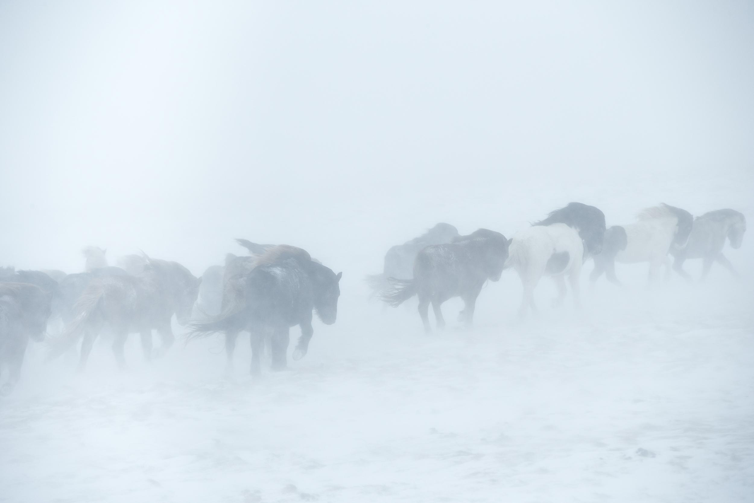 Ice_Horse_027
