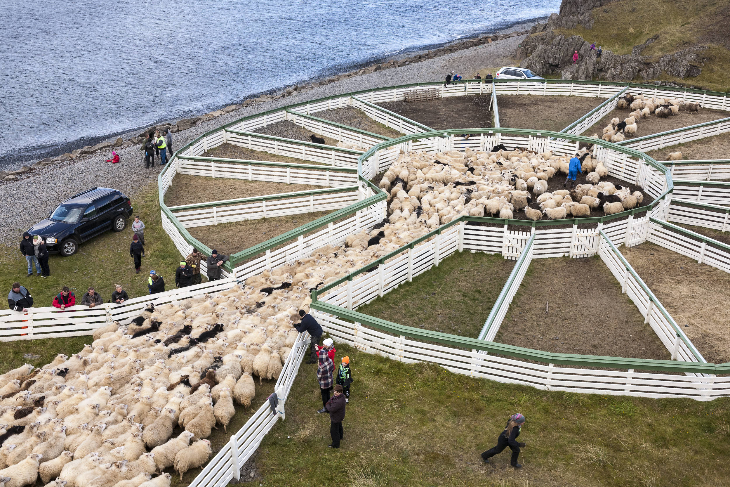 Sheep_006