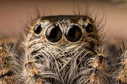 Arachna_005