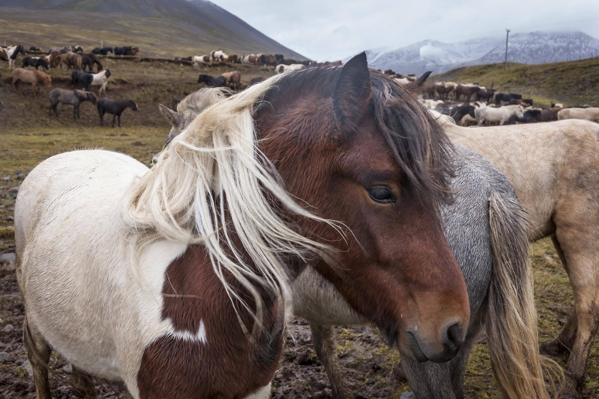 Ice_Horse_029