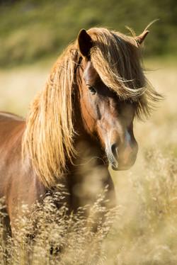 Ice_Horse_025
