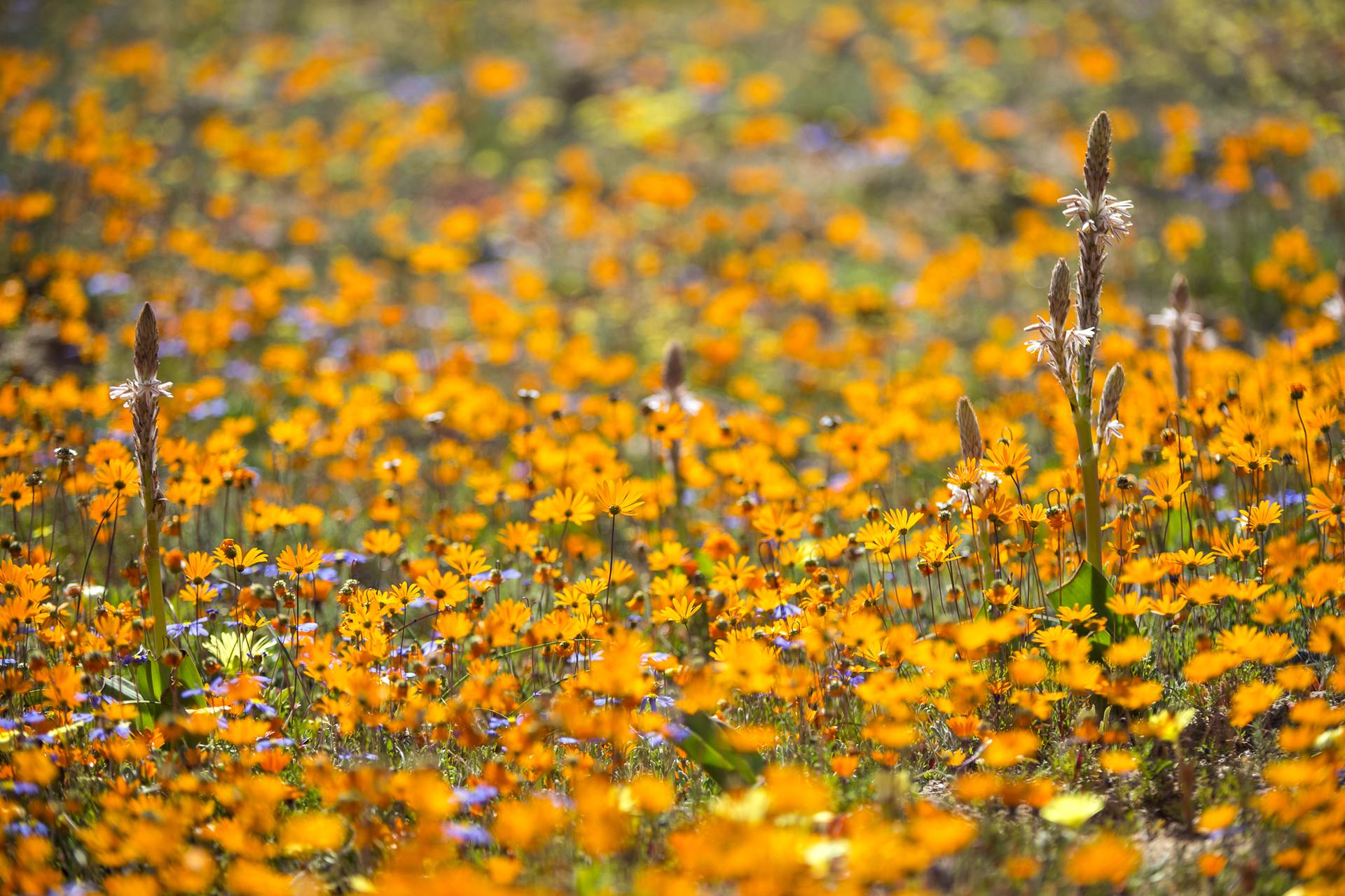SouthAfrica_025.jpg