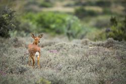SouthAfrica_037.jpg