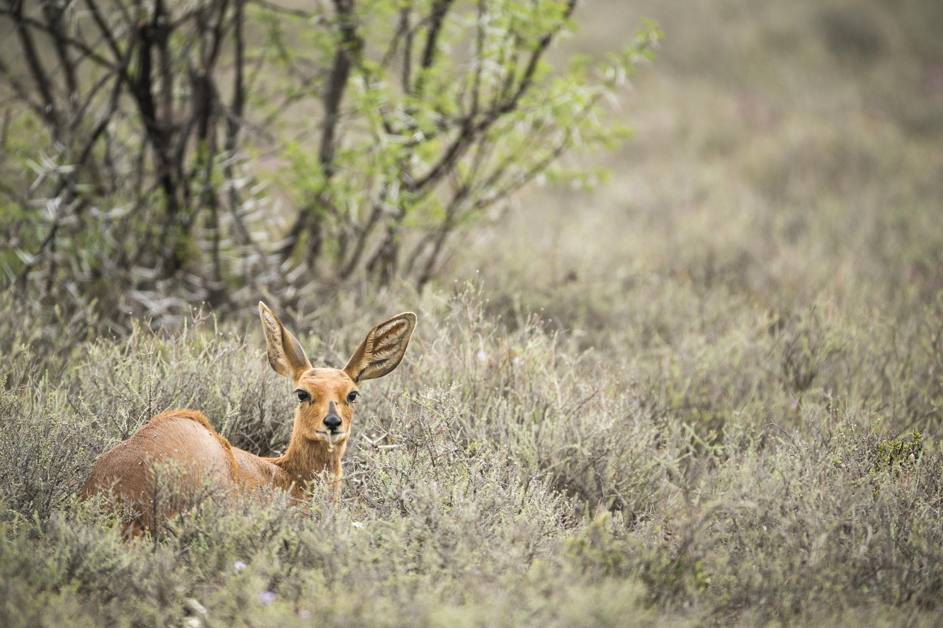 SouthAfrica_038.jpg