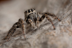 Arachna_022