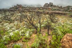 SouthAfrica_048.jpg