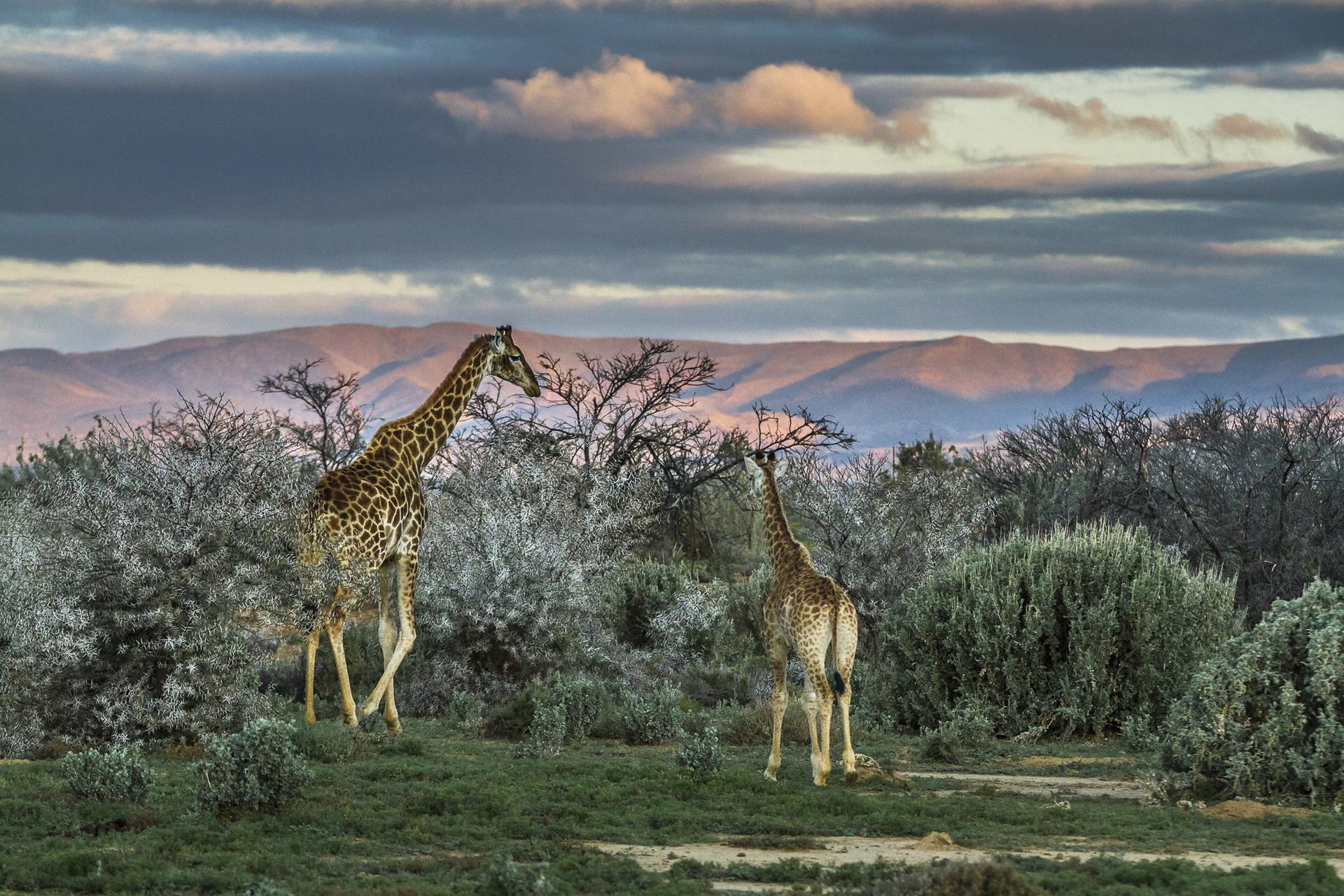 SouthAfrica_022.jpg