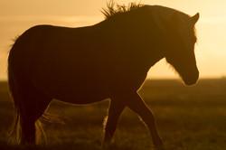 Ice_Horse_006