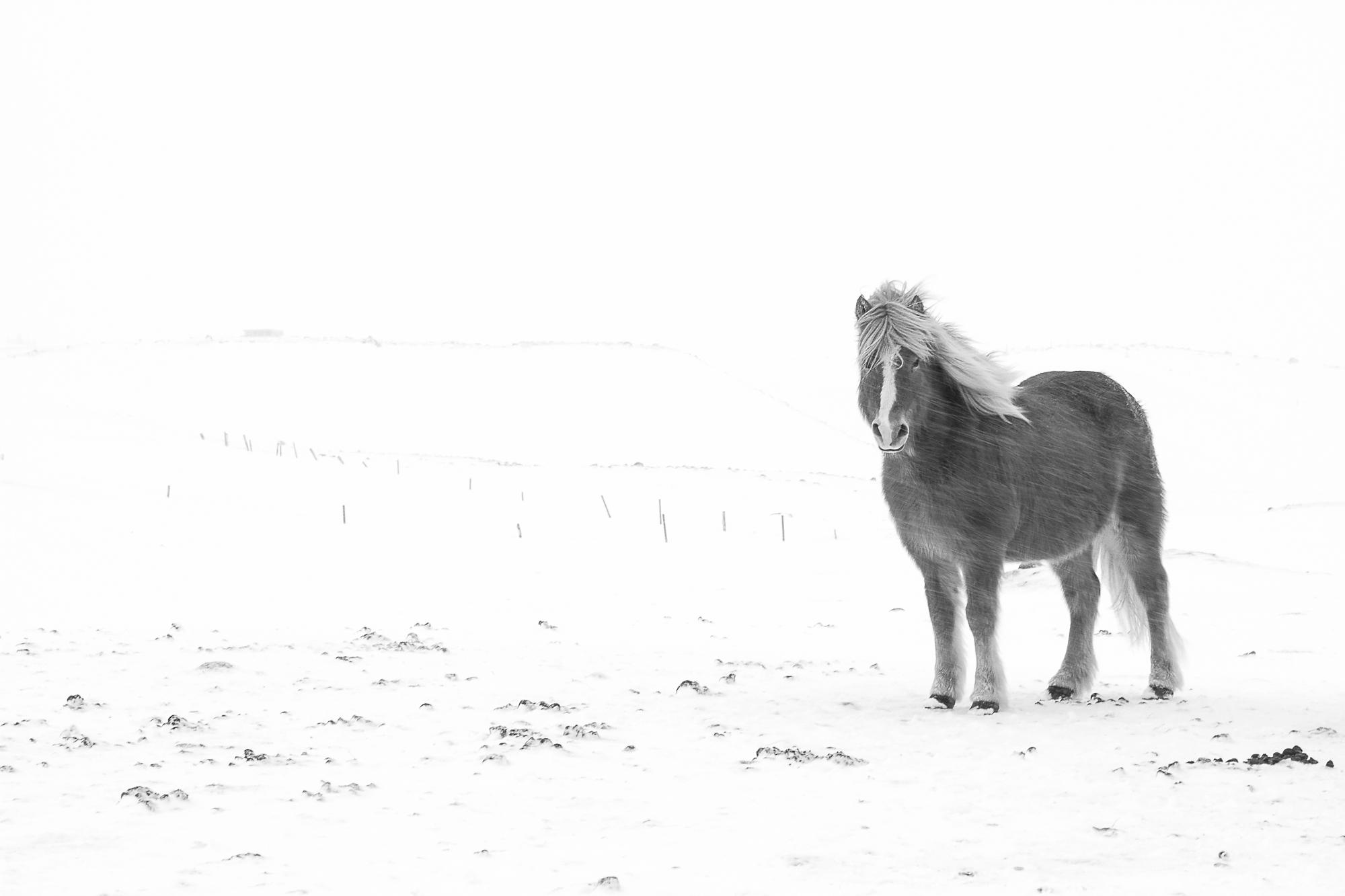 Ice_Horse_045