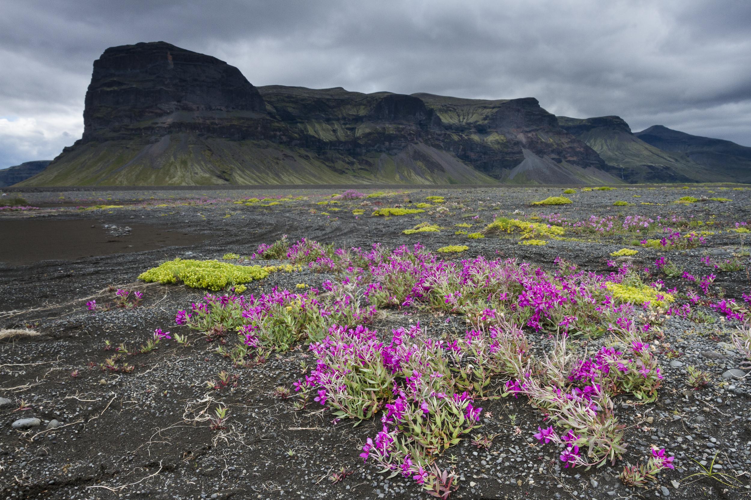 Iceland_026.JPG