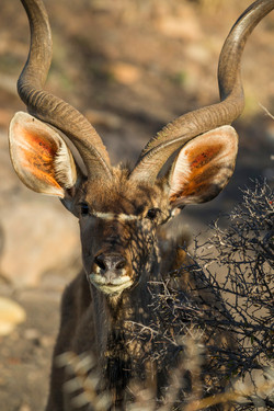 SouthAfrica_014.jpg