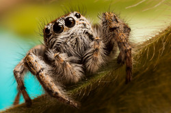 Arachna_001