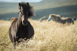 Ice_Horse_024