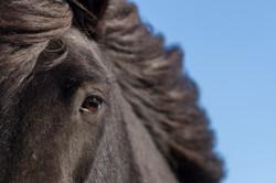 Ice_Horse_041