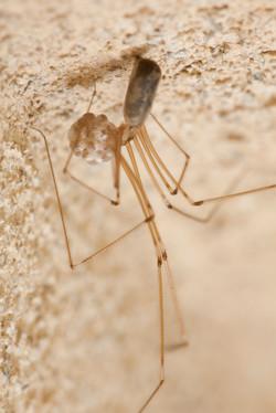Arachna_017