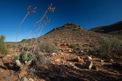 SouthAfrica_046.jpg