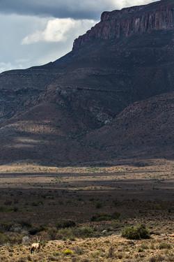 SouthAfrica_005.jpg