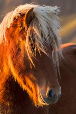 Ice_Horse_005
