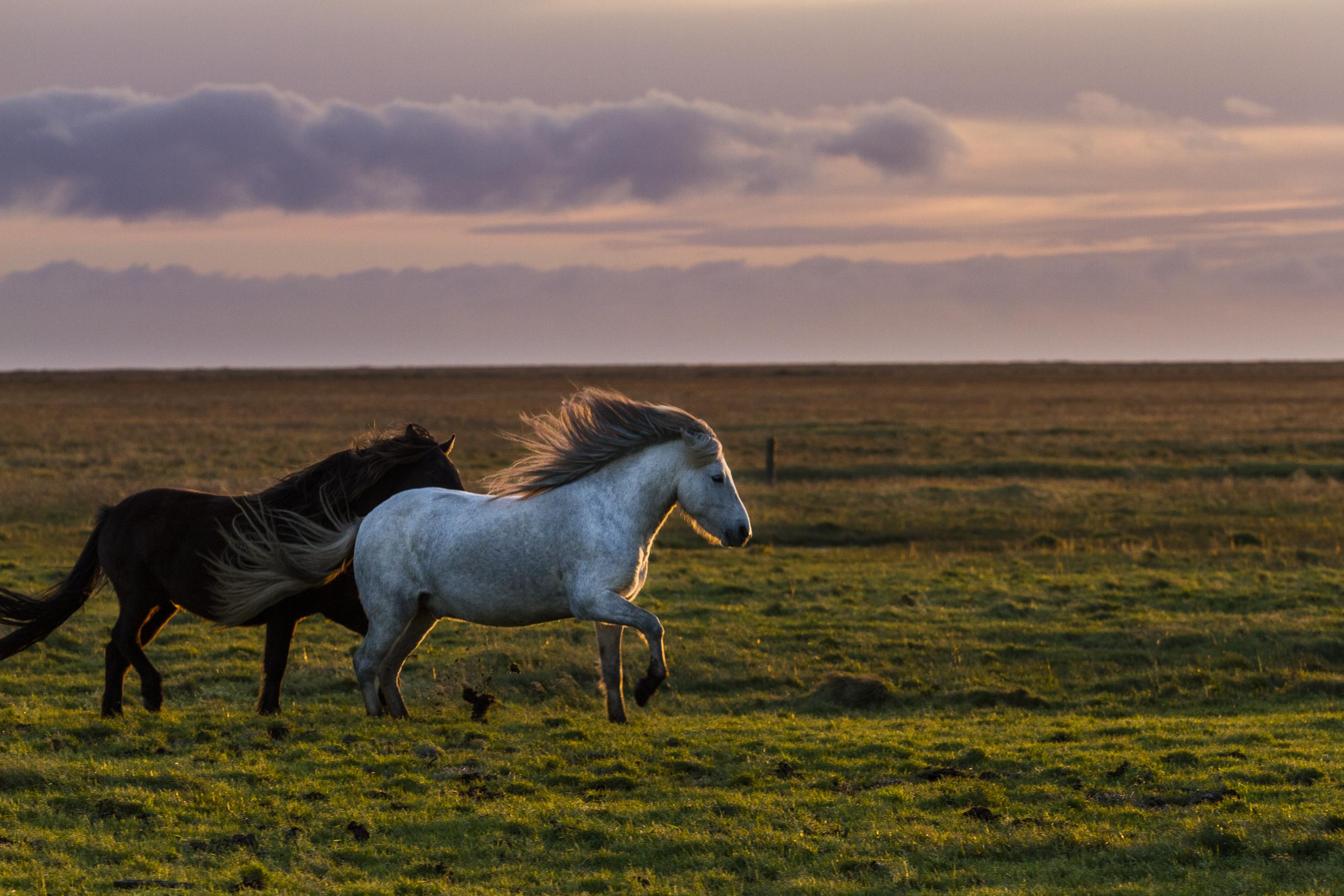 Ice_Horse_002