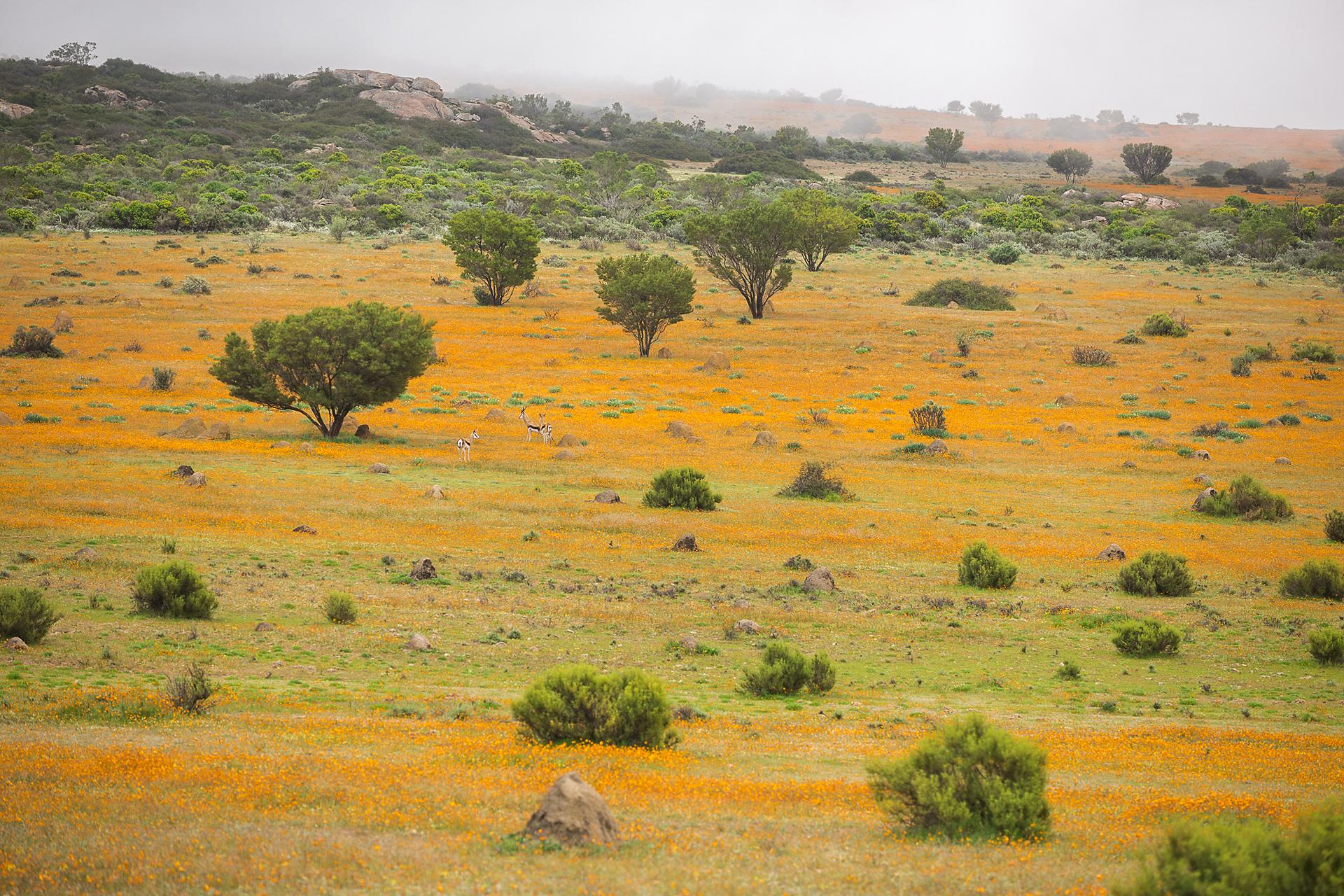 SouthAfrica_030.jpg