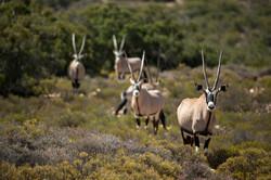 SouthAfrica_003.jpg