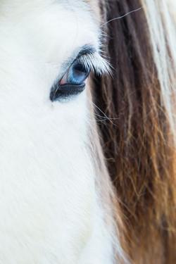 Ice_Horse_028