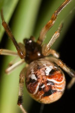 Arachna_027