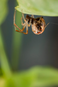 Arachna_028
