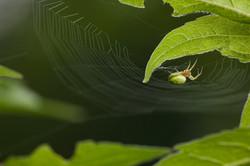 Arachna_034