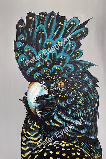 'Clio' the Black Cockatoo Print