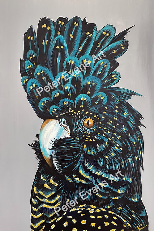 'Clio' the Black Cockatoo Canvas Stretched Print