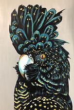 Clio the Black Cockatoo.jpg