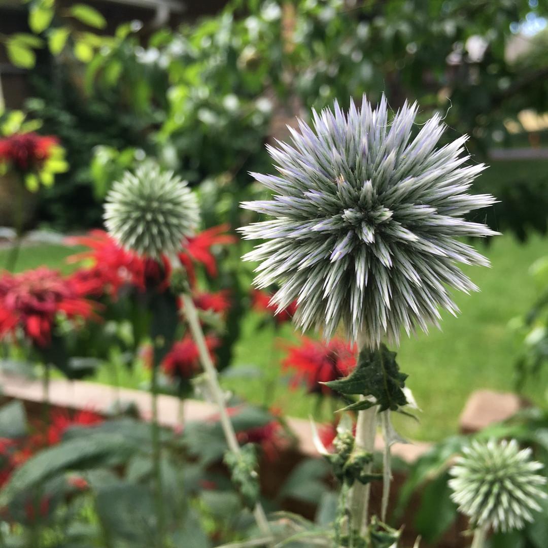 Portland Pollinator Habitat Landscape Design Build