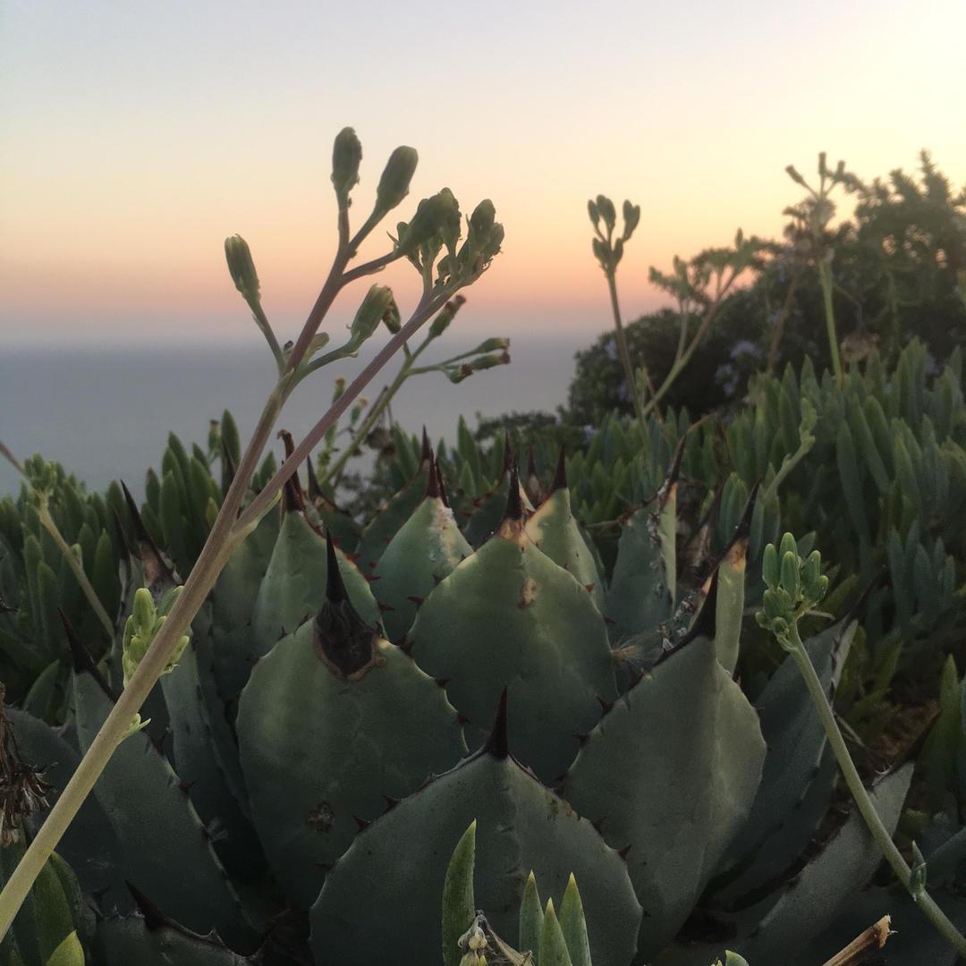 Be Malibu | Malibu, California
