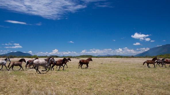 Cavalos Lavradeiros de Roraima