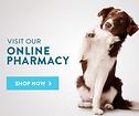 Online Shop Now Image.png