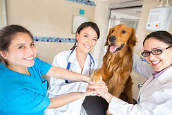 Teamwork at the vet with a group of doctors joining hands with a dog.jpg