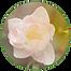 Favicon tulipe.png