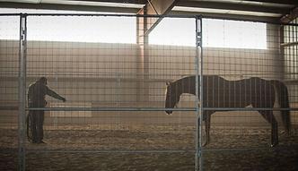 saratoga warhorse1