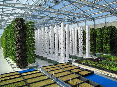 tg-greenhouse-2 (1).jpg