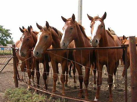 equine horses.jpg