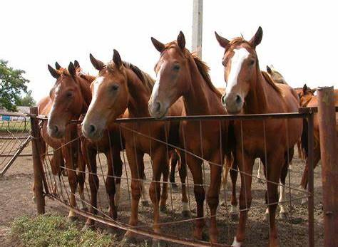 Equine - Horses