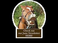 Talking Horse June.png