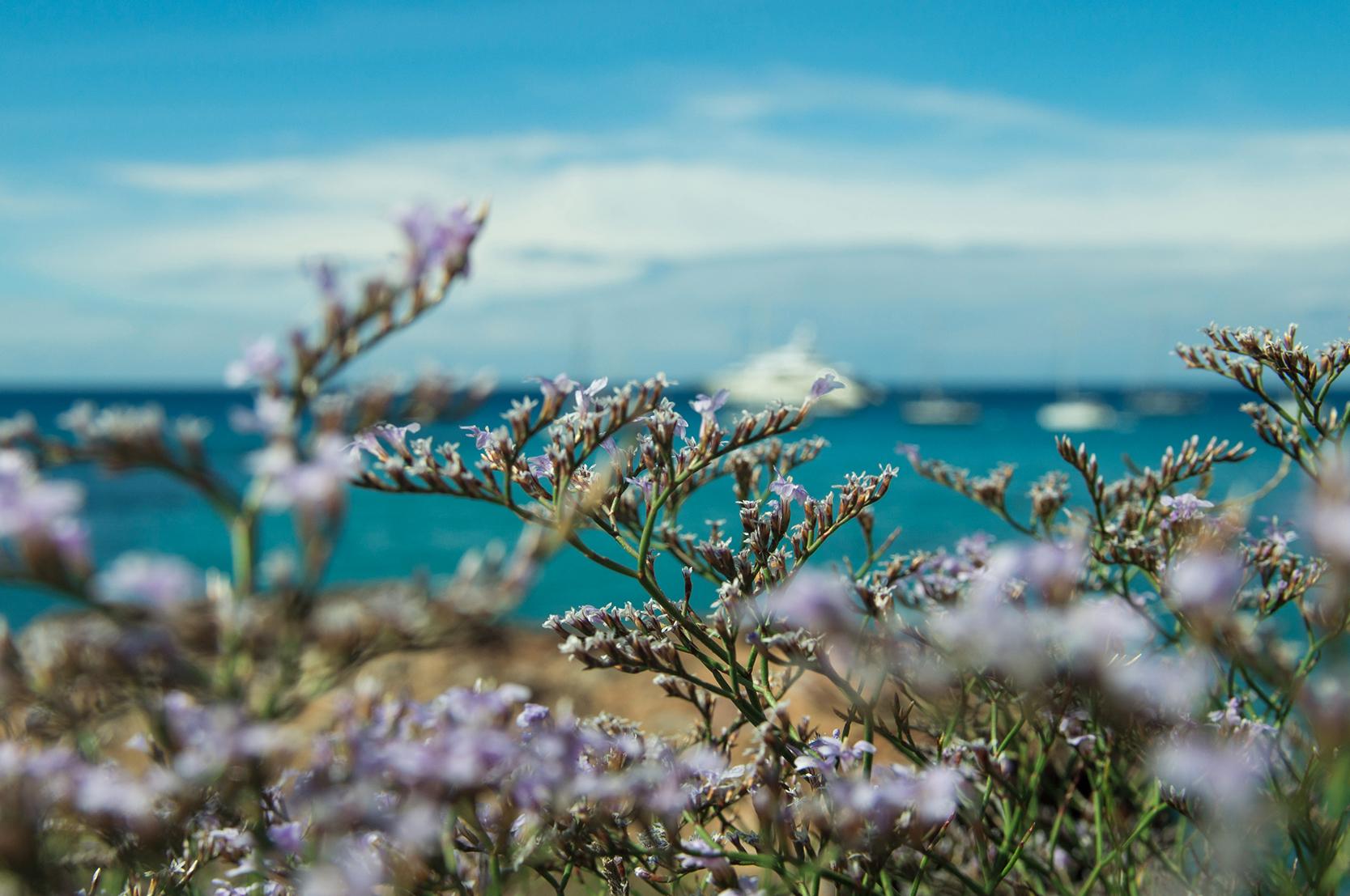 Colourful_ibiza_sea_purple_photo_summer.