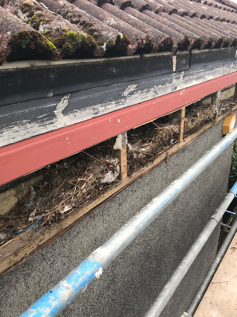 Years of debris behind fascia boards